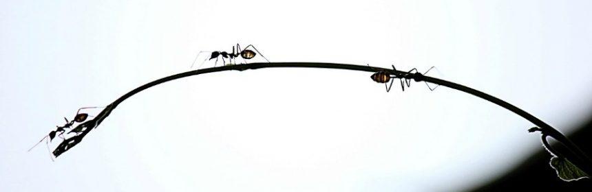 Warum gehen Ameisen nicht in die Kirche?