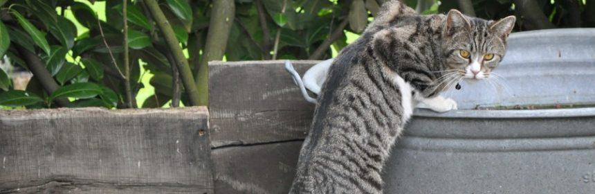 Warum mögen Katzen Minze