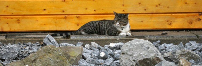 Friert eine Katze?