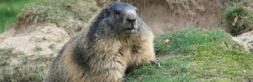 Was ist der Groundhog Day?