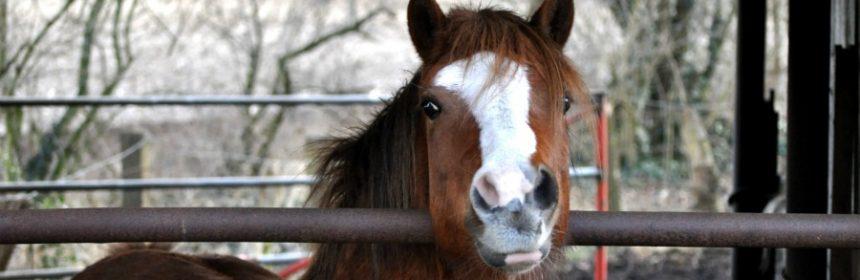 Was braucht ein Auto unbedingt, was dem Pferd sehr lästig ist?