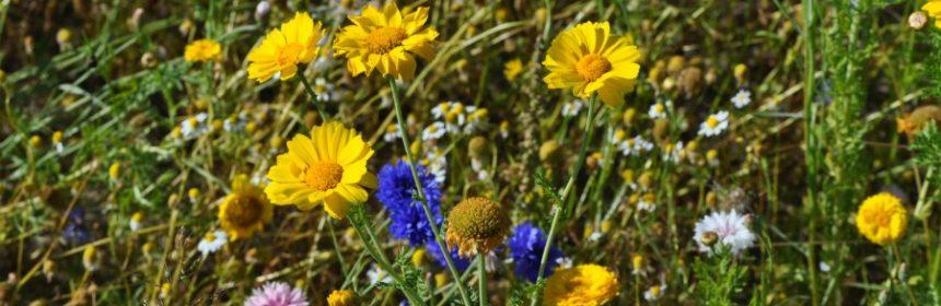 Welche Wildblumen gibt es?