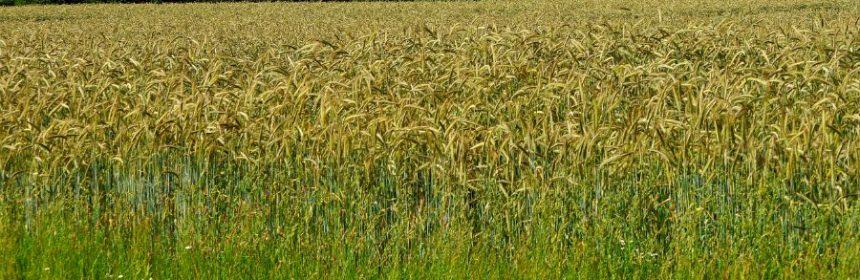 Welche Bauern haben weder Acker noch Hof?