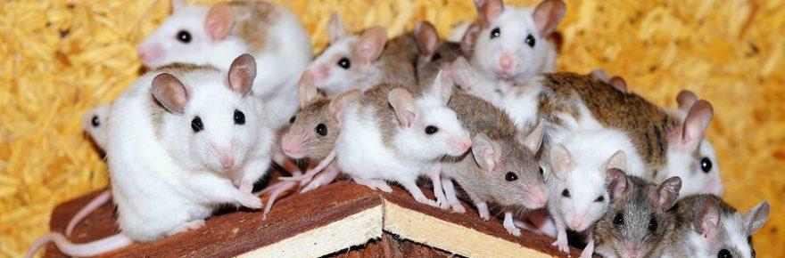 Warum trinken Mäuse keinen Alkohol?