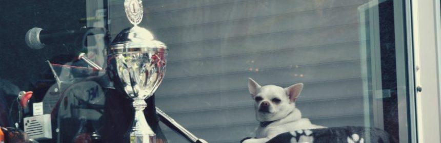 Welche Hunde treten zu Weltmeisterschaften an?