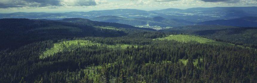 Bayerischer Wald welches Bundesland?