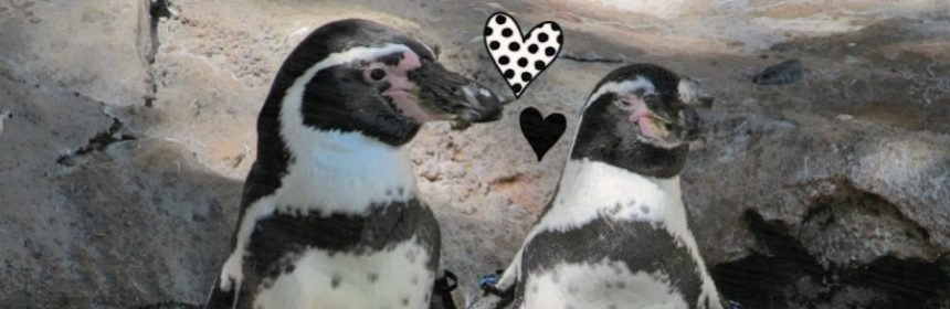 Bleiben Pinguine für immer zusammen?