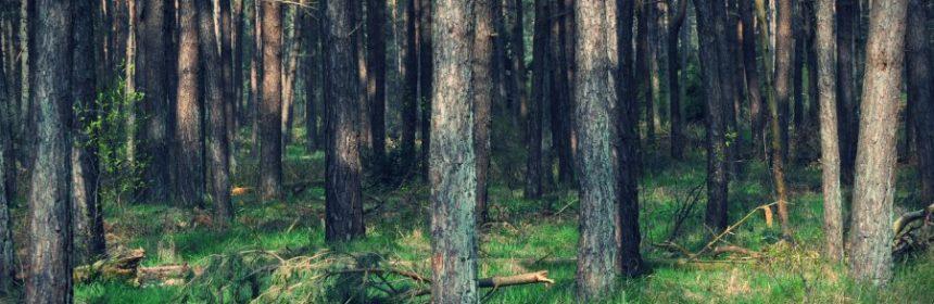Ab wann Wald?
