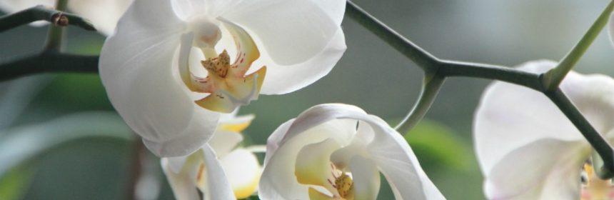 Welches ist die Blume der Freundschaft?