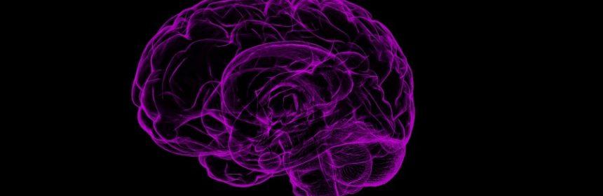 Kann das Gehirn schrumpfen?