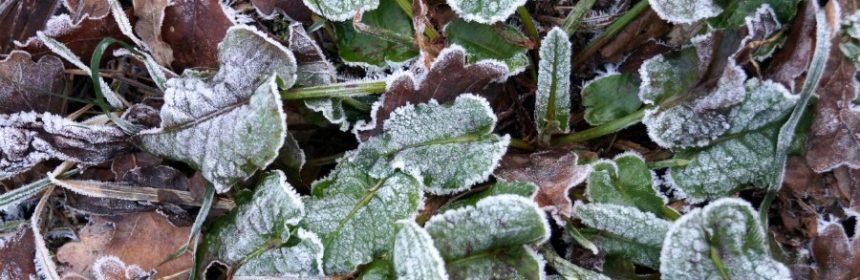 welche pflanzen überstehen frost?