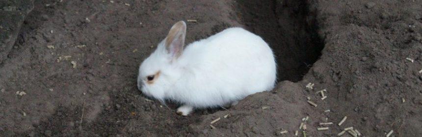 wo kommen kaninchen ursprünglich her?