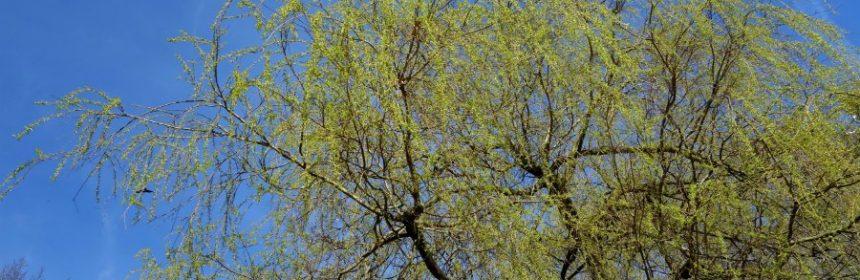 wo bäume pflanzen?