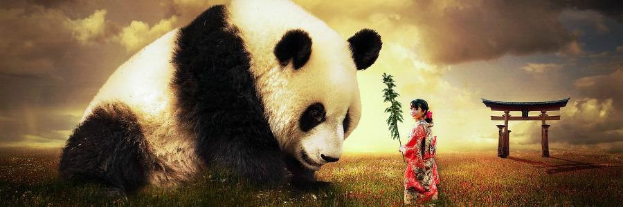 Fragen zu China