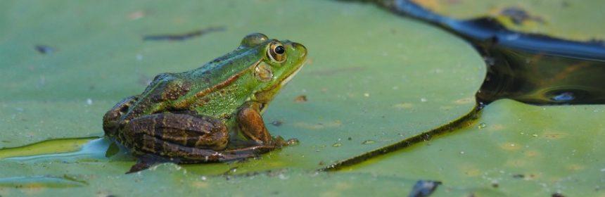 Frosch wie viele Beine? (& Shortcuts)