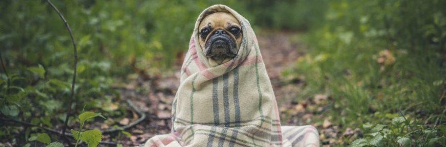Wie nennt man einen Hund in der Sauna?