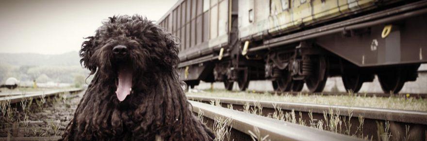 Dürfen Hunde mit der Bahn fahren?