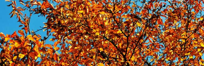 Warum goldener Oktober?