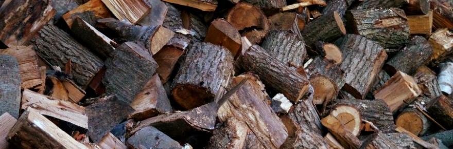 was ist gutes feuerholz?