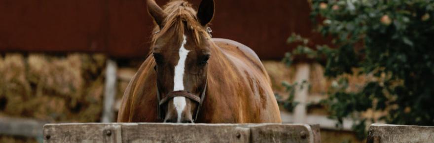 Warum Pferd links verladen?